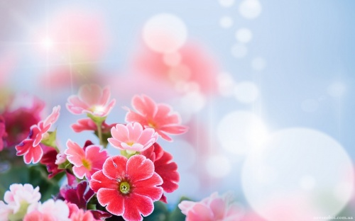 Floral wallpaper 62 (60 wallpapers)